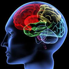 EMFs, RF exposure, cancer, Miami holictic health coach, Miami psychologist